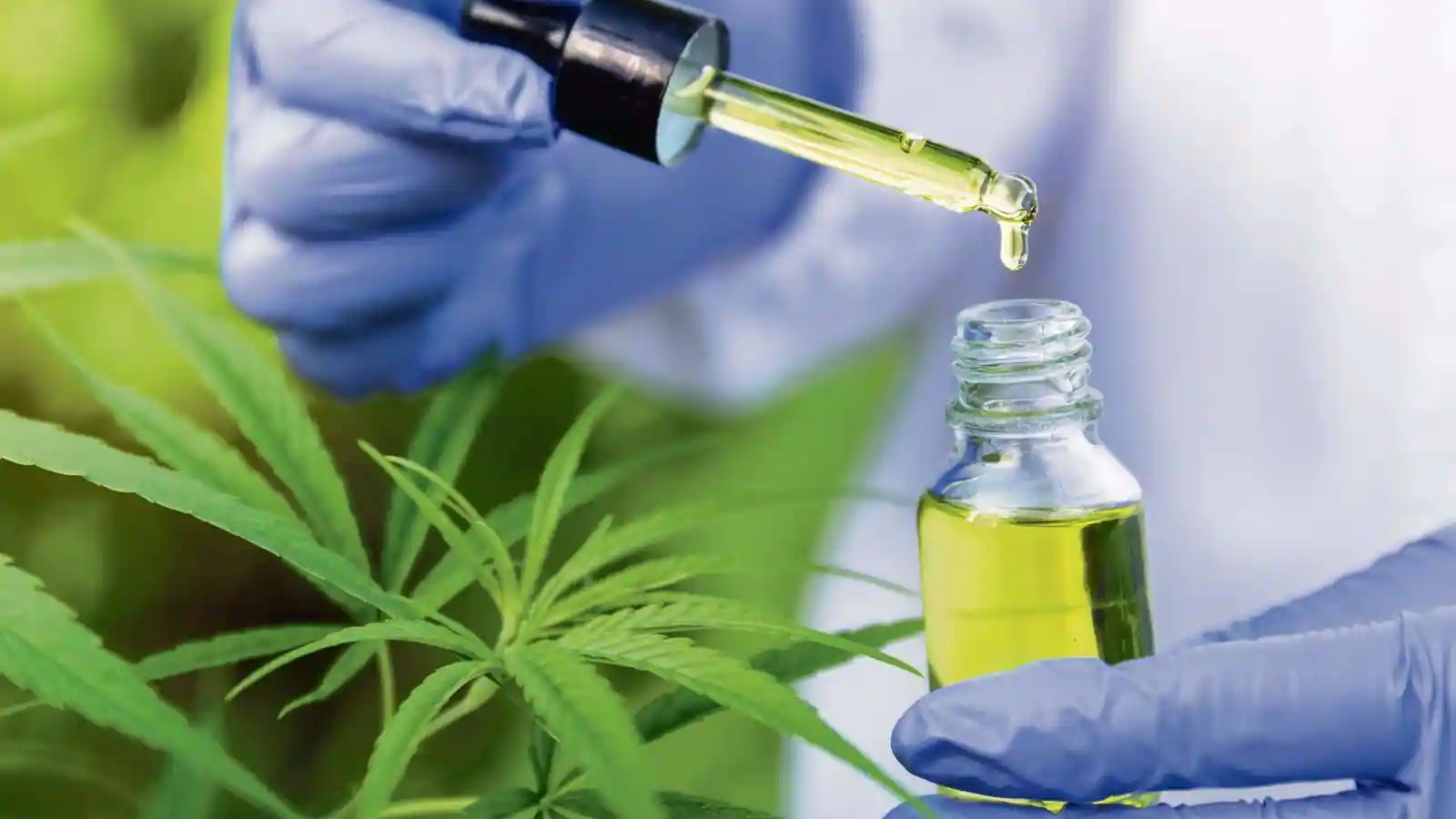 Why Does CBD Have The Best Healing Potential? Check Out Top 2 Reasons!